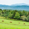 View of the pasture from the trail.- Pitcher Mountain Fire Tower