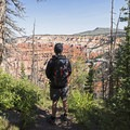 Chessman Loop Trail.- Cedar Breaks National Monument