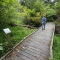 One of a handful of interpretive trails in Kilchis Point Preserve.- Kilchis Point Reserve