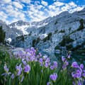 Sierra shooting star flowers abound on the shores of Finger Lake.- Finger Lake via Big Pine Creek South Fork Trail