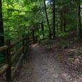 The beginning of the trail near the trailhead.- Cummins Falls State Park Waterfall