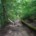 Continue down the Blackburn Fork River Trail.- Cummins Falls State Park Waterfall