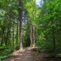 Beautiful trees on the trail.- Cummins Falls State Park Waterfall