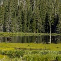 Bull moose in the pond along the South Shore Trail.- Aster Park Overlook Hike