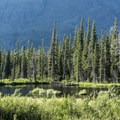 Great moose habitat in the ponds along the South Shore Trail.- Two Medicine Lake Loop Hike