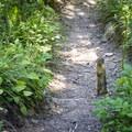 Columbian ground squirrel making a stand.- No Name Lake Hike