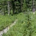 Vault toilet.- No Name Lake Campground