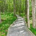 Boadwalk along the Upper Peverly Pond Trail.- Great Bay National Wildlife Refuge