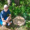 Trailside fungus.- Great Bay National Wildlife Refuge