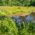A beaver pond on the Ferry Way Trail.- Great Bay National Wildlife Refuge