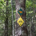 Trail markers tacked to trees.- Jake and Bull Mountain Trail Network