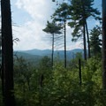 Forested views from on top of the ridgeline.- Jake and Bull Mountain Trail Network