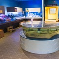 Aquariums in the Seacoast Science Center.- Odiorne Point State Park + Seacoast Science Center
