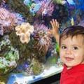 Aquarium in the Seacoast Science Center.- Odiorne Point State Park + Seacoast Science Center