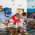All ages can enjoy the touch tank.- Odiorne Point State Park + Seacoast Science Center