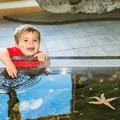 The touch tank provides a hands-on experience.- Odiorne Point State Park + Seacoast Science Center