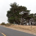 Approaching the Cypress Tree Tunnel in Point Reyes National Seashore from the east.- Cypress Tree Tunnel