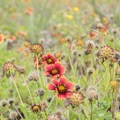 Local wildflowers are abundant here.- Ocracoke Campground
