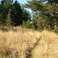 A golden grassy section of the trail.- Mount Jumbo via the Tivoli Trail