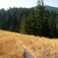 The trail spends its time winding through tall grasses and trees.- Mount Jumbo via the Tivoli Trail
