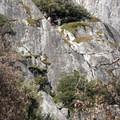 Swan Slab, Yosemite National Park.- Swan Slab