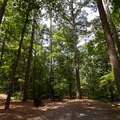 A campsite under the shade of the forest.- Pocomoke State Park Shad Landing Campground