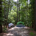 A relatively secluded campsite.- Pocomoke State Park Shad Landing Campground