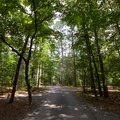 One of the multiple camping loops.- Pocomoke State Park Shad Landing Campground