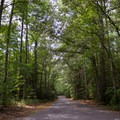 Another campground loop road.- Pocomoke State Park Shad Landing Campground