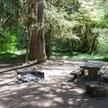 Typical campsite in Kiahanie Campground in the Willamette National Forest.- Kiahanie Campground