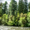 The campground sits along the North Fork of the Middle Fork Willamette River.- Kiahanie Campground