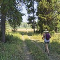 The trail isn't heavily used, so you may have it all to yourself.- Arizona Creek Trail to Bailey Meadows