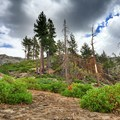 Landscape decades after the Rainbow Fire.- Iva Bell Hot Springs via Fish Creek Trail