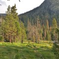 The hillside meadows at Iva Belle.- Iva Bell Hot Springs via Fish Creek Trail