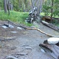 One of several campsites in the area.- Iva Bell Hot Springs via Fish Creek Trail