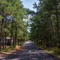 One of the roads running through the campground.- Cape Henlopen State Park Campground