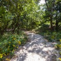 A path leading to a walk-in campsite.- Cape Henlopen State Park Campground