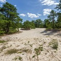 The surrounding terrain of the campground.- Cape Henlopen State Park Campground