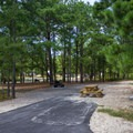An example of the majority of sites at the campground.- Cape Henlopen State Park Campground