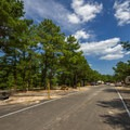 A different part of the camping loops.- Cape Henlopen State Park Campground