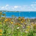 Odiorne Point offers many views of the seacoast.- Odiorne Point State Park + Seacoast Science Center