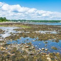 Crabs can be found in tide pools along the shore.- Odiorne Point State Park + Seacoast Science Center