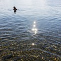 The water is so clear here.- Jackson Lake Swim Beach