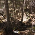 Trail following alongside Mosca Creek.- Mosca Pass Trail
