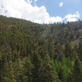 View along the trail.- Mosca Pass Trail