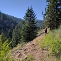 Hiking along the Rock Creek/Ochoco Mountains Trail looking south into the Rock Creek drainage.- Ochoco Mountains Loop: Rock Creek to Black Canyon Wilderness