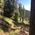 Hiking along a portion of the Rock Creek/Ochoco Mountains Trail high above Rock Creek.- Ochoco Mountains Loop: Rock Creek to Black Canyon Wilderness