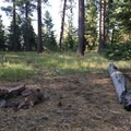 Dispersed camp in a grove of old growth ponderosa pines where you can camp at the end of the first hiking day.- Ochoco Mountains Loop: Rock Creek to Black Canyon Wilderness