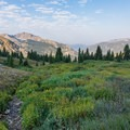 Many flowers, even in September.- Pawnee and Buchanan Pass Loop