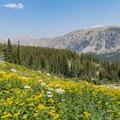 More flowers looking north.- Pawnee and Buchanan Pass Loop